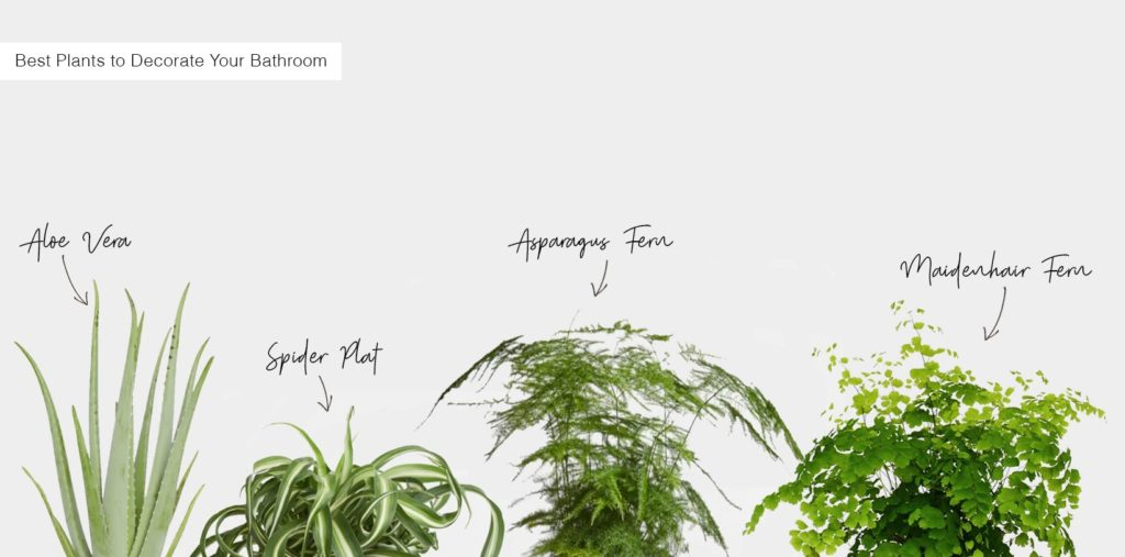 Best indoor plants to decorate your bathroom