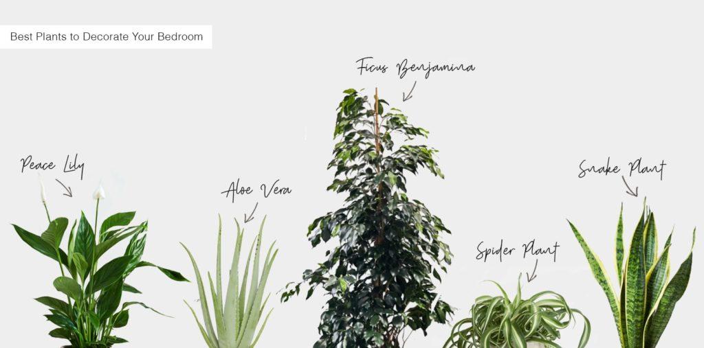 Best indoor plants to decorate your bedroom