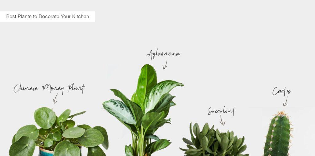 Best indoor plants to decorate your kitchen